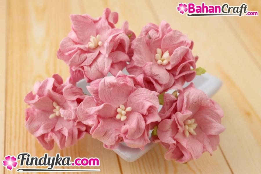 Findyka Com Bunga Anggrek Pink Ayu